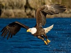 Znate li kako ženka orla bira oca za svoje potomstvo