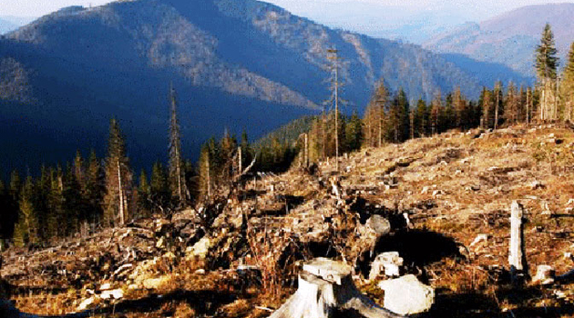 Dragaš: Šumari izbodeni nožem u ataru sela Orčuše