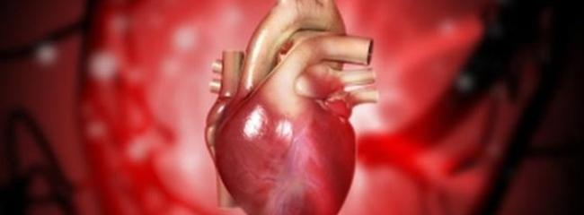 REVOLUCIONARNO: Pronađen način da se SRCE izliječi SAMO, čak i nakon infarkta!