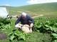 """Farmeri iz Restelice i okolnih sela kroz peticiju izražavaju nezadovoljstvo načinom menadžiranja nacionalnim parkom """"Šari"""""""