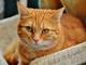Mačak preživio centrifugu i pranje na 60 stepeni