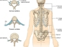 Pravi uzrok boli: Kako je kičma povezana s unutrašnjim organima